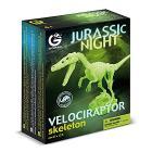 Dinosauro Velociraptor scheletro