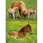 I pony (09173)