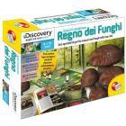 Regno dei funghi (3545)