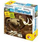 Fossili di Mammut (3566)
