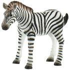 Zebra puledro (63676)