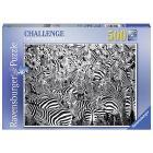 La Sfida delle Zebre (14807)