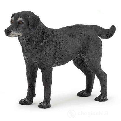 Cassis lapdog (54013)