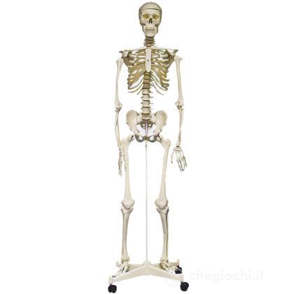 Grande scheletro