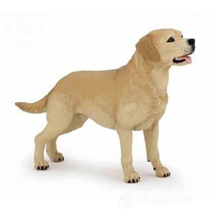 Labrador (54029)