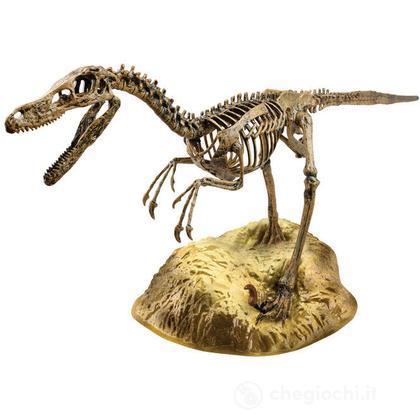 Scheletro Dinosauro Velociraptor