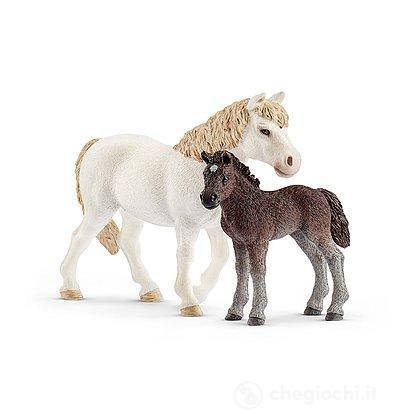 Giumenta Pony e Puledro (2542423)