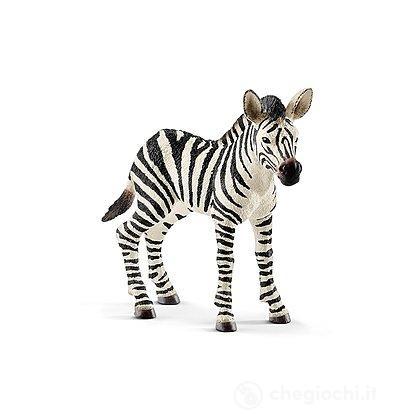Puledro di Zebra (2514811)