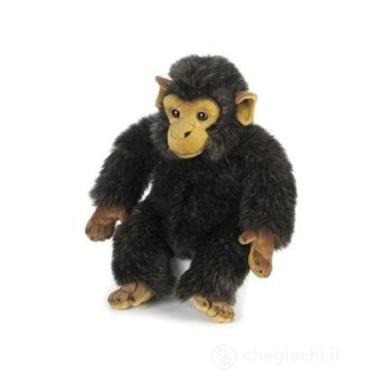 Baby Scimpanzé