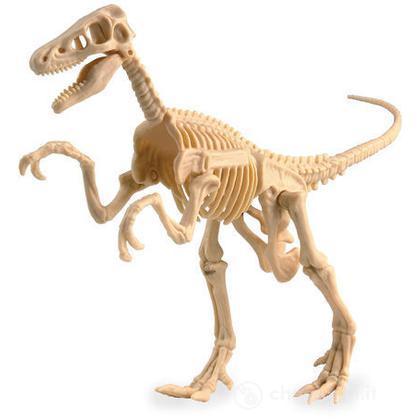Velociraptor da scavare (IP30295)