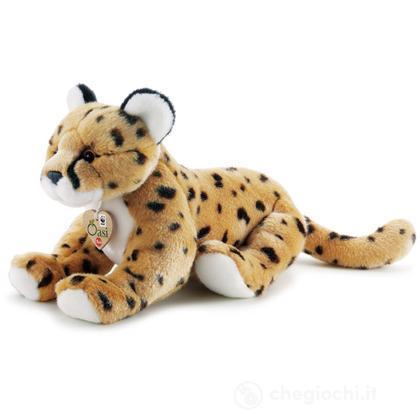Ghepardo WWF Oasi medio