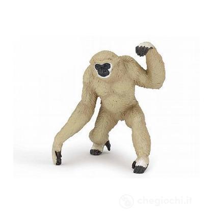 Gibbone (50146)