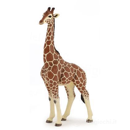 Giraffa maschio (50149)