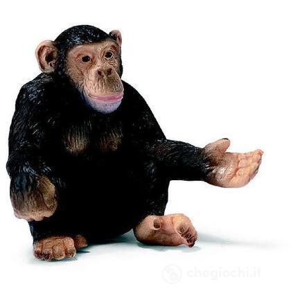 Scimpanzé femmina (14191)