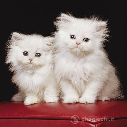Persiani bianchi
