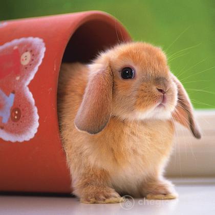 Dolce coniglietto