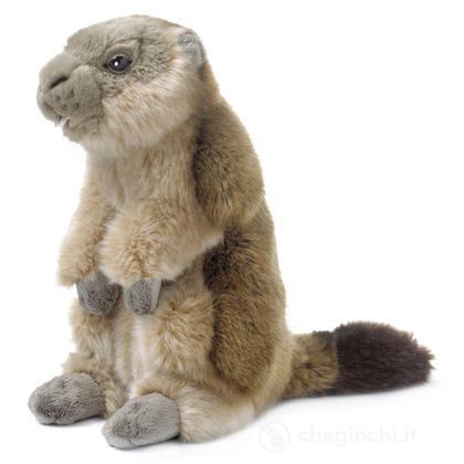 Marmotta grande