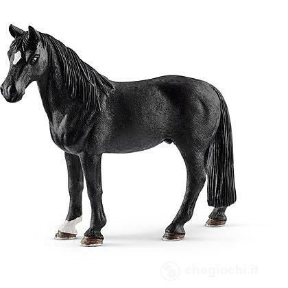 Castrone Tennessee Walker (13832)