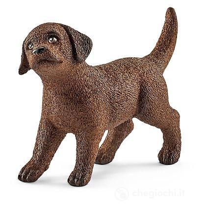 Cucciolo Di Labrador Retriever (13835)