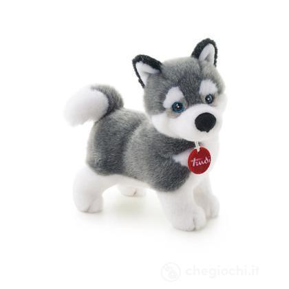 Husky Marcus piccolo