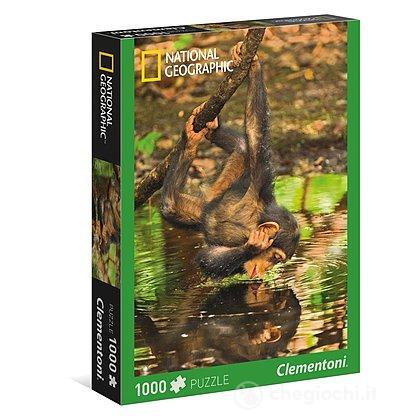 Scimpanzè Piccolo 1000 pezzi National Geographic (39301)