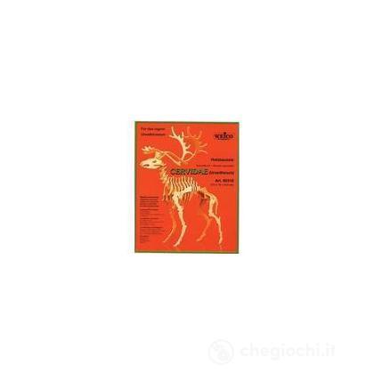 Rangifer Tarandus