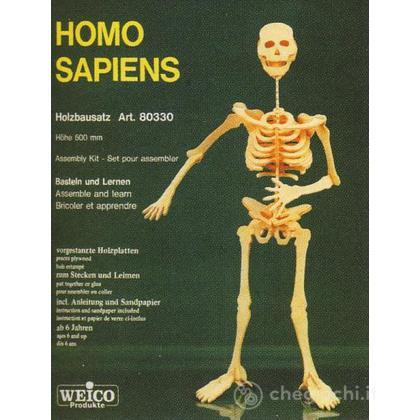 Homo Sapiens scheletro