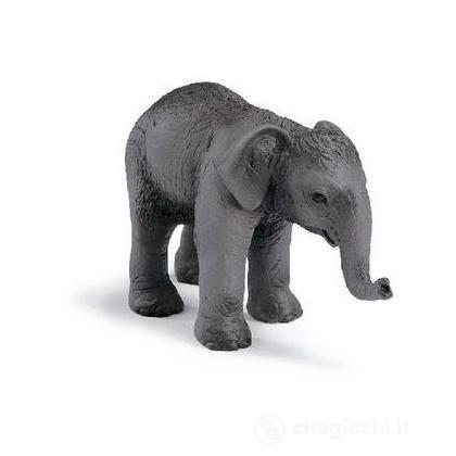 Elefantino asiatico (14343)