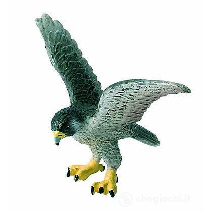Falco pellegrino (69356)