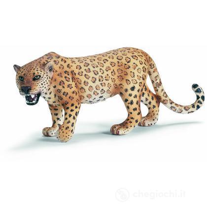 Leopardo (14360)