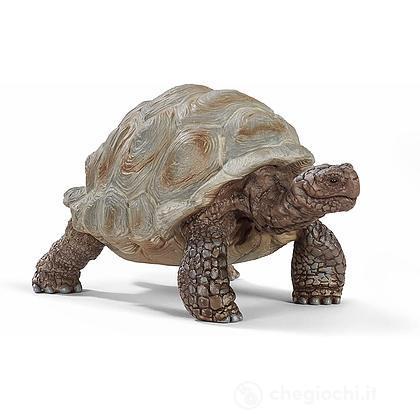 Tartaruga gigante (2514824)