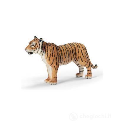 Tigre femmina (14370)