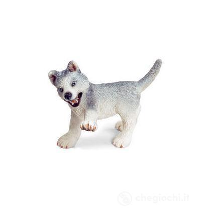 Husky cucciolo (16373)