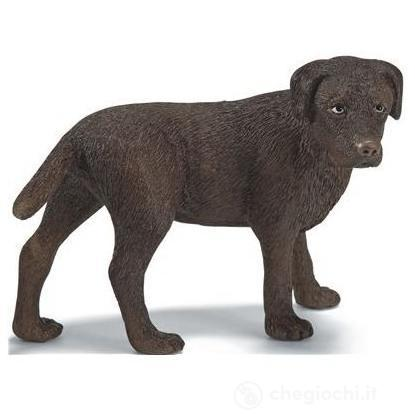 Labrador femmina (16387)