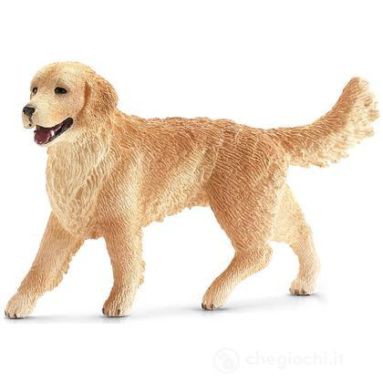 Golden Retriever Femmina (16395)