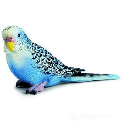 Pappagallino ondulato blu (14409)