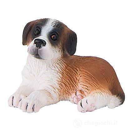 Cane - Saint-Bernard cucciolo Bongo (65431)
