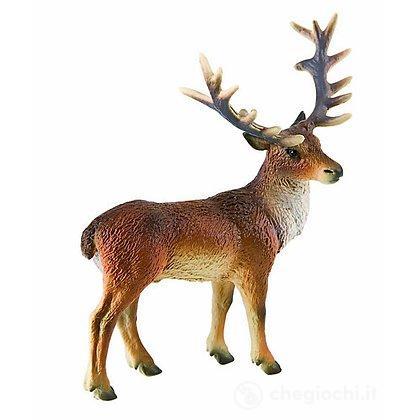 Cervo (64433)