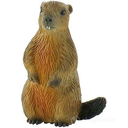 Marmotta (64455)