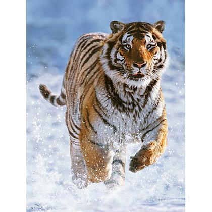 Tigre nella neve