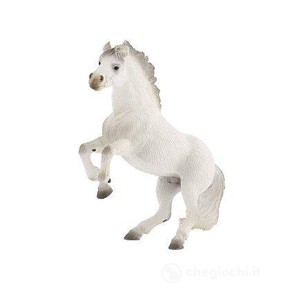 Cavalli - Lipizzaner Stallion (62511)