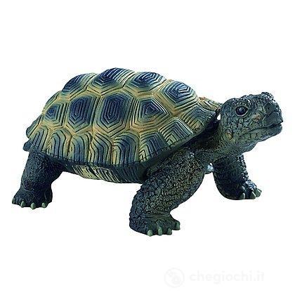 Tartaruga (63553)