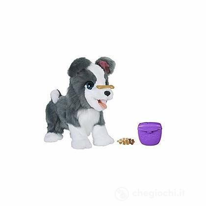 Ricky il mio fedele cucciolotto (E0384103)