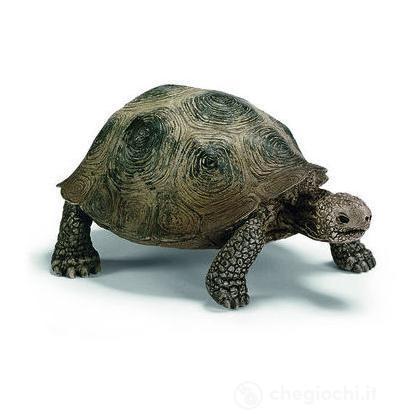 Tartaruga gigante (14601)