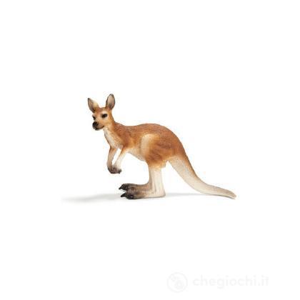 Canguro maschio (14607)