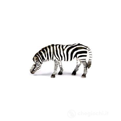 Zebra al pascolo (14609)