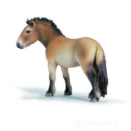 Cavallo di Przewalski (13620)