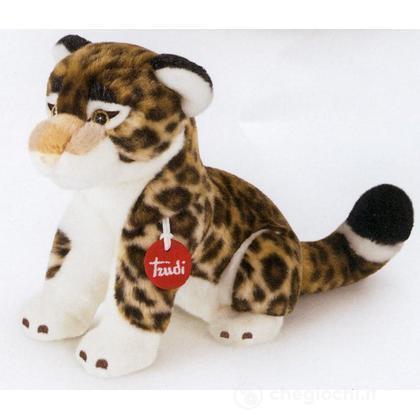 Leopardo Achille piccolo