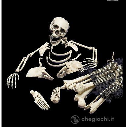 Sacco con 18 ossa