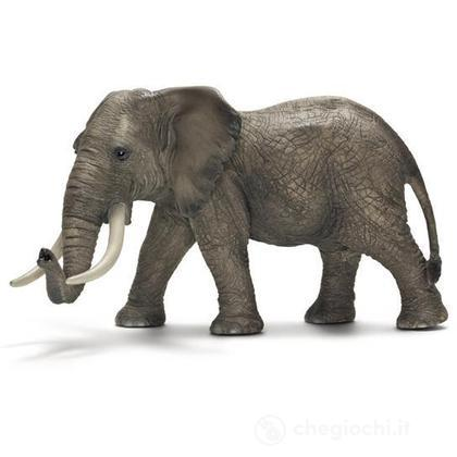 Elefante africano (14656)